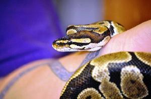 how to get an index of an optionmenu python