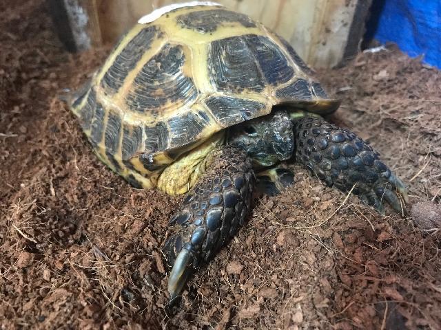Adoptable Animals - Colorado Reptile Humane Society