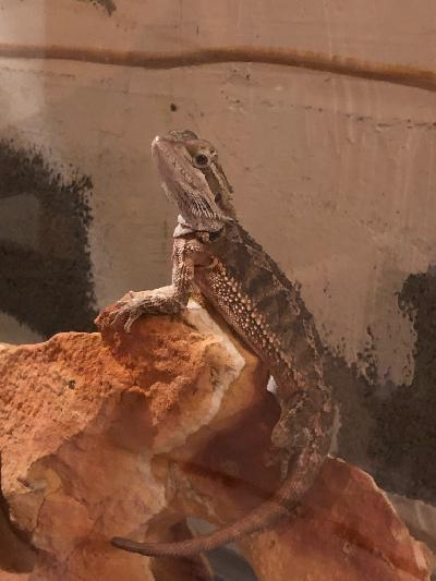 Homepage - CORHS - Improving the lives of Reptiles and