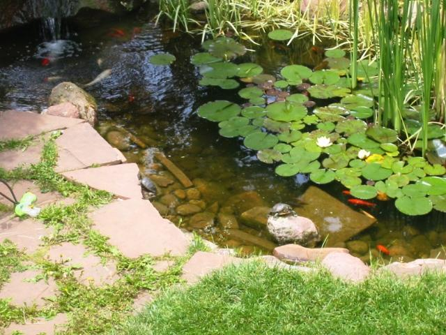Habitat guidelines outdoor ponds for aquatic turtles for Koi pond size requirements